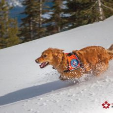 Introducing The Furriest Member of the Canadian Ski Patrol!